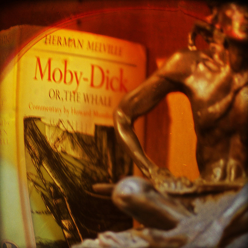Moby dick photo